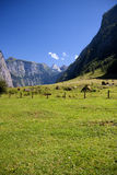 View from the Koenigssee towards the alps. In summer Royalty Free Stock Photo