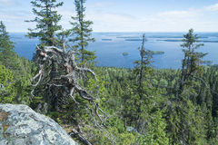 View from the Koli to lake Pielinen Royalty Free Stock Photo