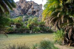 View of Kourtaliotis river and canyon near Preveli beach at Libyan sea, river and palm forest, southern Crete. Stock Photography