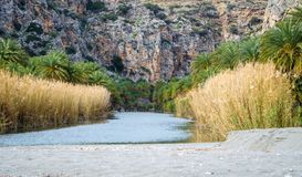View of Kourtaliotis river and canyon near Preveli beach at Libyan sea, river and palm forest, southern Crete. Royalty Free Stock Images