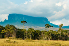 View of Kukenan Tepui, Gran Sabana, Venezuela. Summits of table mountains called in pemon indians language: tepui are usually surrounded by clouds. Canaima Stock Image