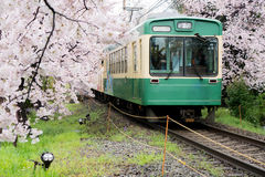 View of Kyoto local train traveling on rail tracks with flourish. Ing cherry blossoms along the railway in Kyoto, Japan royalty free stock image