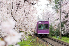 View of Kyoto local train traveling on rail tracks with flourish Stock Photography