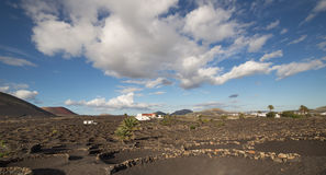 View of La Geria, the vinegrowing region of Lanzarote, Spain Royalty Free Stock Photography