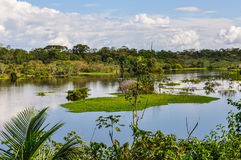 View of the lake in the Amazon Rainforest, Manaos, Brazil. View of the lake in the Amazon Rainforest, close to Manaus, Brazil Royalty Free Stock Images