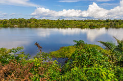 View of the lake in the Amazon Rainforest, Manaos, Brazil. View of the lake in the Amazon Rainforest, close to Manaus, Brazil Royalty Free Stock Photo