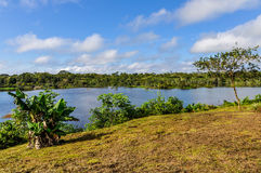 View of the lake in the Amazon Rainforest, Manaos, Brazil. View of the lake in the Amazon Rainforest, close to Manaus, Brazil Royalty Free Stock Image