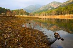 View of lake  in autumn day. Muga,  Catalonia Stock Image