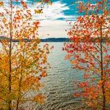View of lake through beautiful autumn maple trees. Stock Photos
