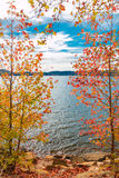 View of lake through beautiful autumn maple trees. Stock Images