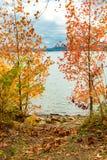View of lake through beautiful autumn maple trees. Stock Photography