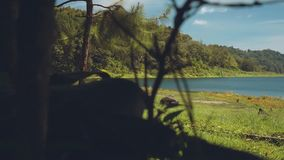 View of a lake from behind bushes, Buyan Lake. Slide stock video footage