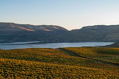 A view of Lake Chelan from the Benson vineyard at sunset Royalty Free Stock Photo