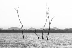 Landscape lake in Thailand royalty free stock photography