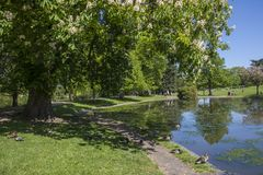 Colchester Castle Park in Essex. A view of the lake in Colchester Castle Park in the historic town of Colchester, Essex, UK royalty free stock photo
