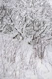 After the snowfall royalty free stock images