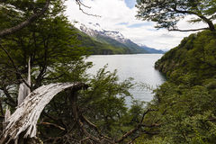 View of lake del Desierto from the woods Stock Photos