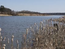 View of lake through dry reed Stock Images