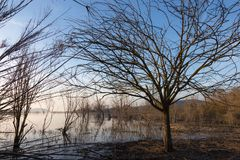 View of a lake at golden hour, with a tree and intricate branche Royalty Free Stock Photos