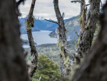 View of Lake Nahuel Huapi from the forest of Cerro Llao Llao among old trees stock image