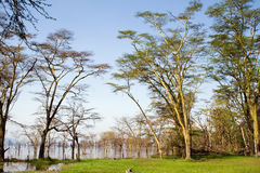 View at Lake Nakuru National Park. Kenya Royalty Free Stock Photos
