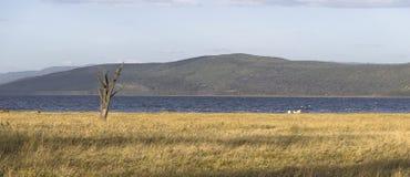 View on the lake Nakuru Stock Images
