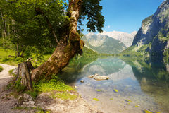 View of the lake of Obersee, Berchtesgaden Royalty Free Stock Photo