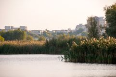 Beautiful lake in Vacaresti Nature Park, Bucharest City, Romania. View of a lake with reeds and buildings in Vacaresti Nature Park, Bucharest City, Romania Stock Photography