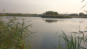 Beautiful lake in Vacaresti Nature Park, Bucharest City, Romania stock footage