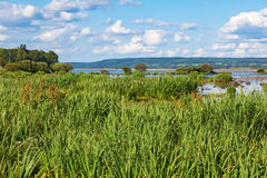 View of the lake with reeds Royalty Free Stock Photos