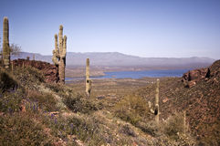 View of Lake Roosevelt Stock Photography