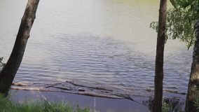 View of the lake from the shore stock footage