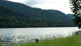 View of Lake Teletskoye in the Altai Republic. In the spring stock footage