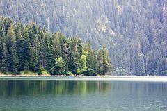 The view of the lake and thick pine forest stock image