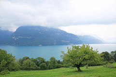 View at Lake Thun with surrounding mountains in Switzerland. Meadow with fruit trees at the foreground Stock Photos