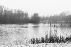 Winter scene at a lake. View of a lake in winter, black & white photography, taken from the shore royalty free stock photography