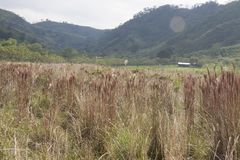 View of landscape of Chichonal path, Chiapas, Mexico.  royalty free stock images