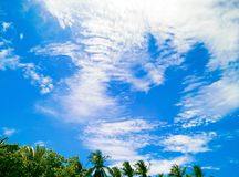 View landscape coconut tree with bluesky Royalty Free Stock Image
