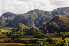 A view of the landscape. In a coffee producing region Royalty Free Stock Photos