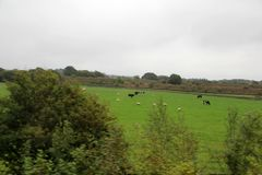 view on the landscape with cows and sheeps on a grassland under a cloudy sky in durham north east of england stock image
