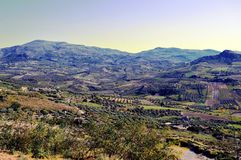 A view on a landscape of cultures. A view) on a landscape of cultures of olive trees and vineyards Stock Image