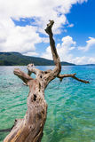 View landscape kai travel thailand nature sand sea clouds beautiful vacation relax turquoise paradise water sky blue andaman touri. Ravee island at Satun Royalty Free Stock Photography