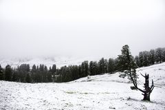 View Landscape snView Landscape snow snowing covered on alpine tree at top of mountain in Kaunergrat nature park. View Landscape snow snowing covered on alpine Stock Image