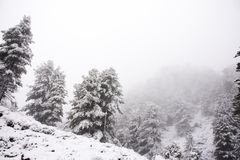 View Landscape snView Landscape snow snowing covered on alpine tree at top of mountain in Kaunergrat nature park. View Landscape snow snowing covered on alpine Royalty Free Stock Photography