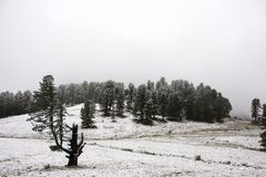 View Landscape snView Landscape snow snowing covered on alpine tree at top of mountain in Kaunergrat nature park. View Landscape snow snowing covered on alpine Royalty Free Stock Photo