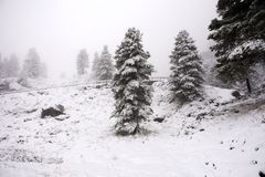 View Landscape snView Landscape snow snowing covered on alpine tree at top of mountain in Kaunergrat nature park. View Landscape snow snowing covered on alpine Stock Images
