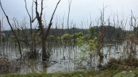 View landscape of trees standing dead and dry in dirty water pond. Effects Environment from Water contaminated with Chemicals and oil at Samut Songkhram stock video