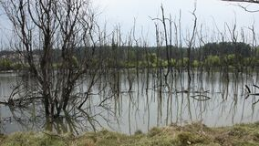 View landscape of trees standing dead and dry in dirty water pond in Thailand. View landscape of trees standing dead and dry in dirty water pond Effects stock video footage