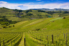 View of the Langa vineyards. View of the vineyards and Langa hills royalty free stock images