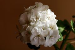 View of a large bouquet of white flowers royalty free stock photography